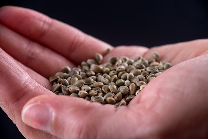Are Seed Banks Legit?