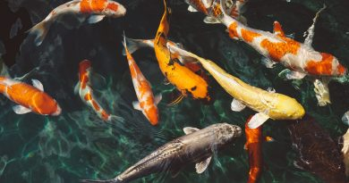 Guidelines for fish farming during lockdown