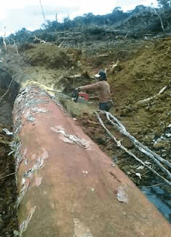 Original_deforest