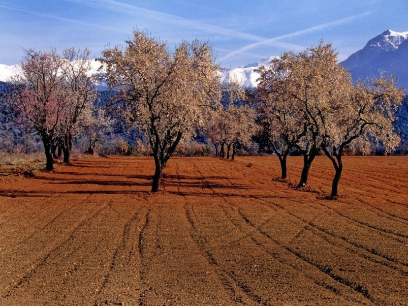 Almond trees at an agriturismo farm stay in Catalonia, Spain.