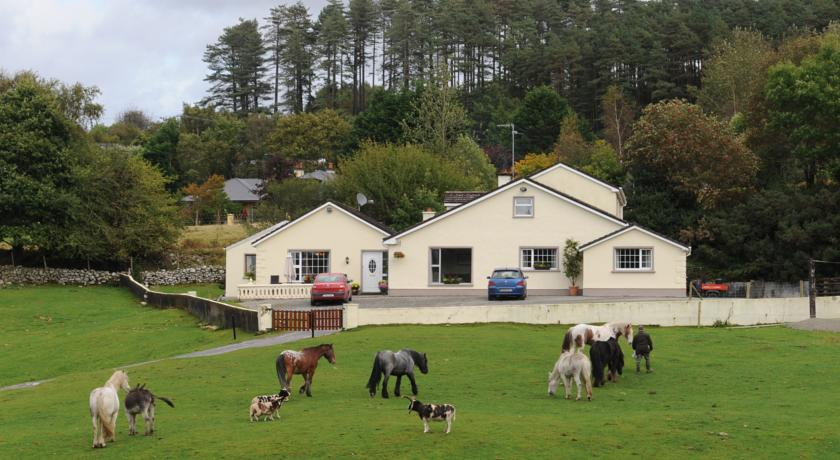 Horses and other farm animals at Muckross Riding Stables, a family friendly farm stay with horse riding near Killarney, Co.Kerry, Ireland.