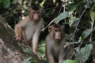 farmstay malaysia jungle treks