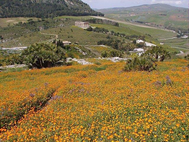 Fields of flowers in rural Sicily.