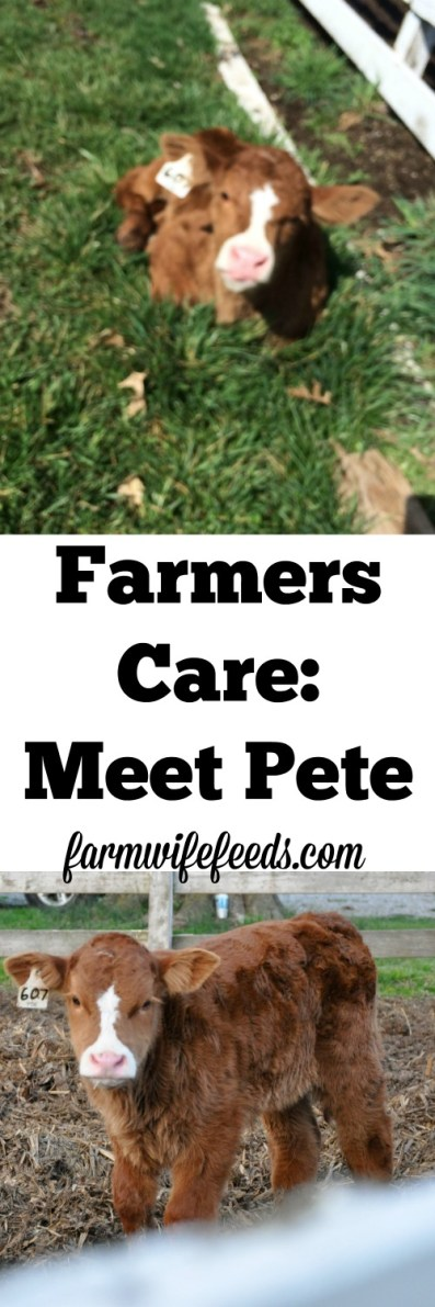 This is just one example of how farmers care for livestock day in and day out, there is so much bad press regarding modern production agriculture, sharing Pete's story is the positive!