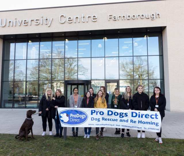 Pro Dogs Direct Are A Registered Charity Who Rescue And Re Home Dogs Of All Breeds Across England Students Were More Than Happy To Help The Charity And