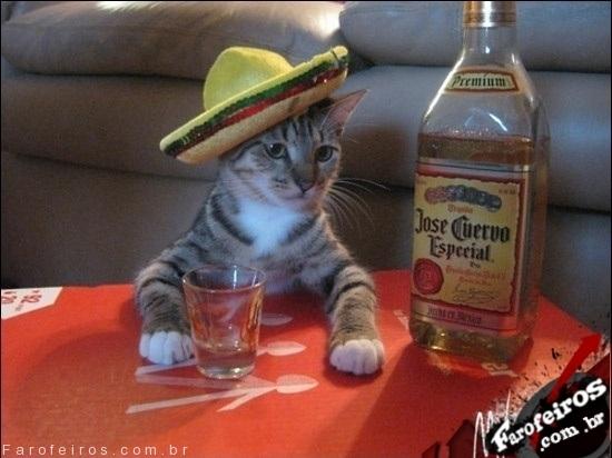 Gato tequila