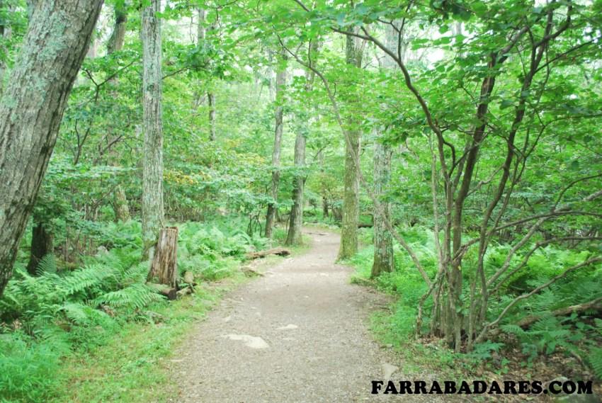 Shenandoah National Park - Stony Man trilha