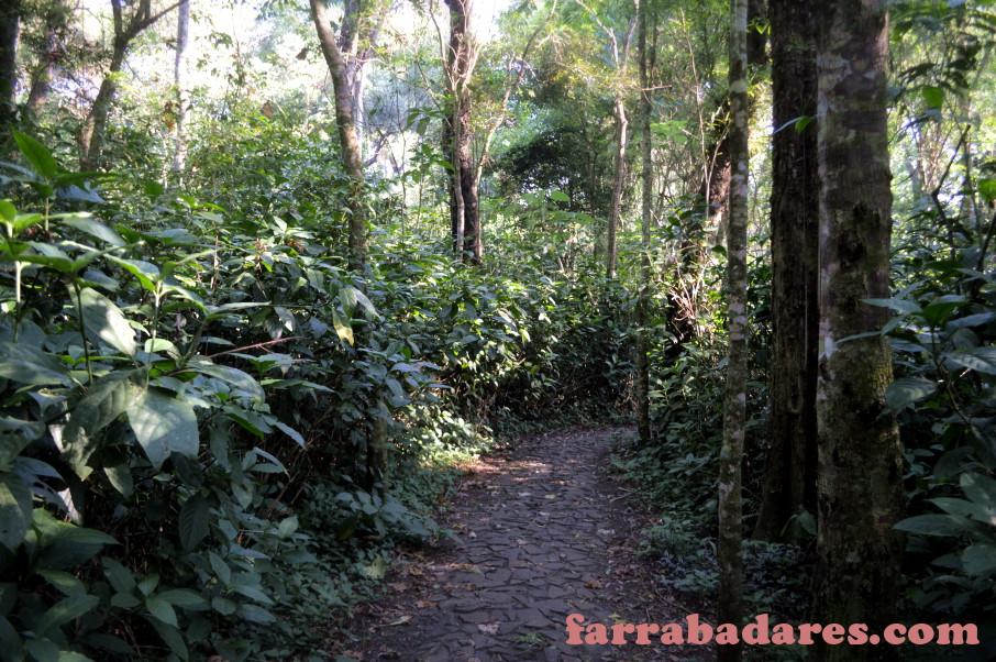 Foz do Iguaçu - trilha no Hotel San Martin