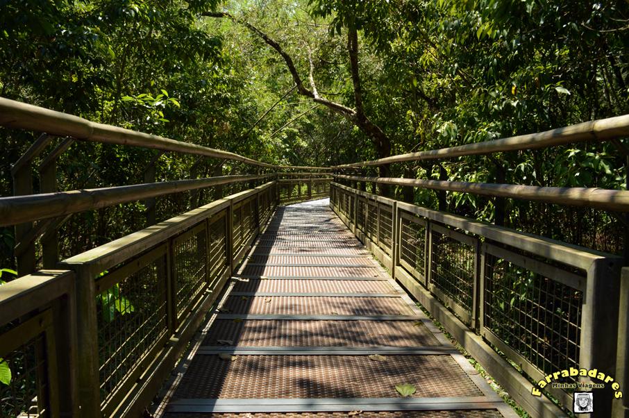 Parque Nacional Iguazú - passarelas das trilhas