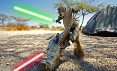 Ground_Squirrel_Fight