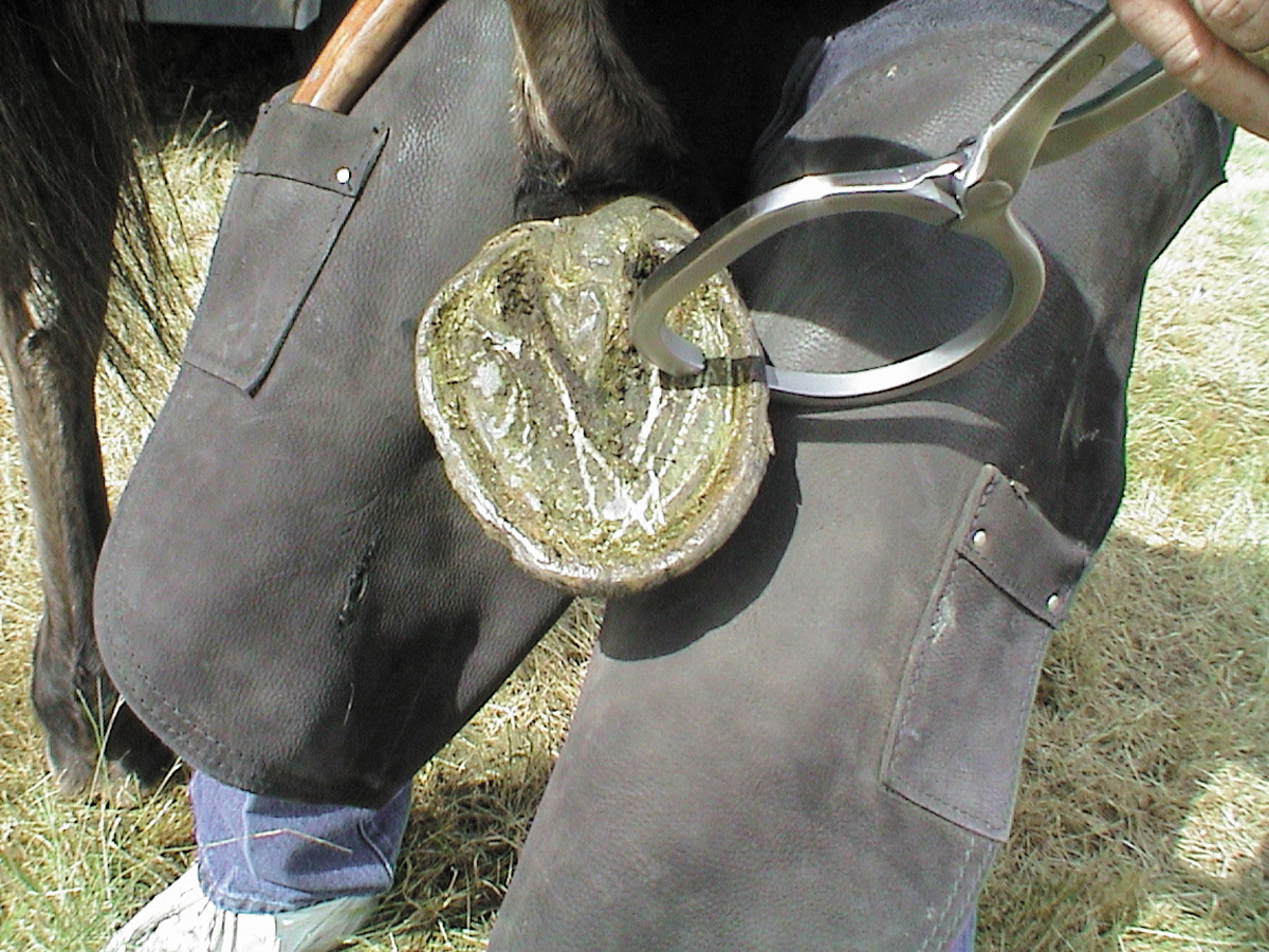 Htest 2 Farrier Products