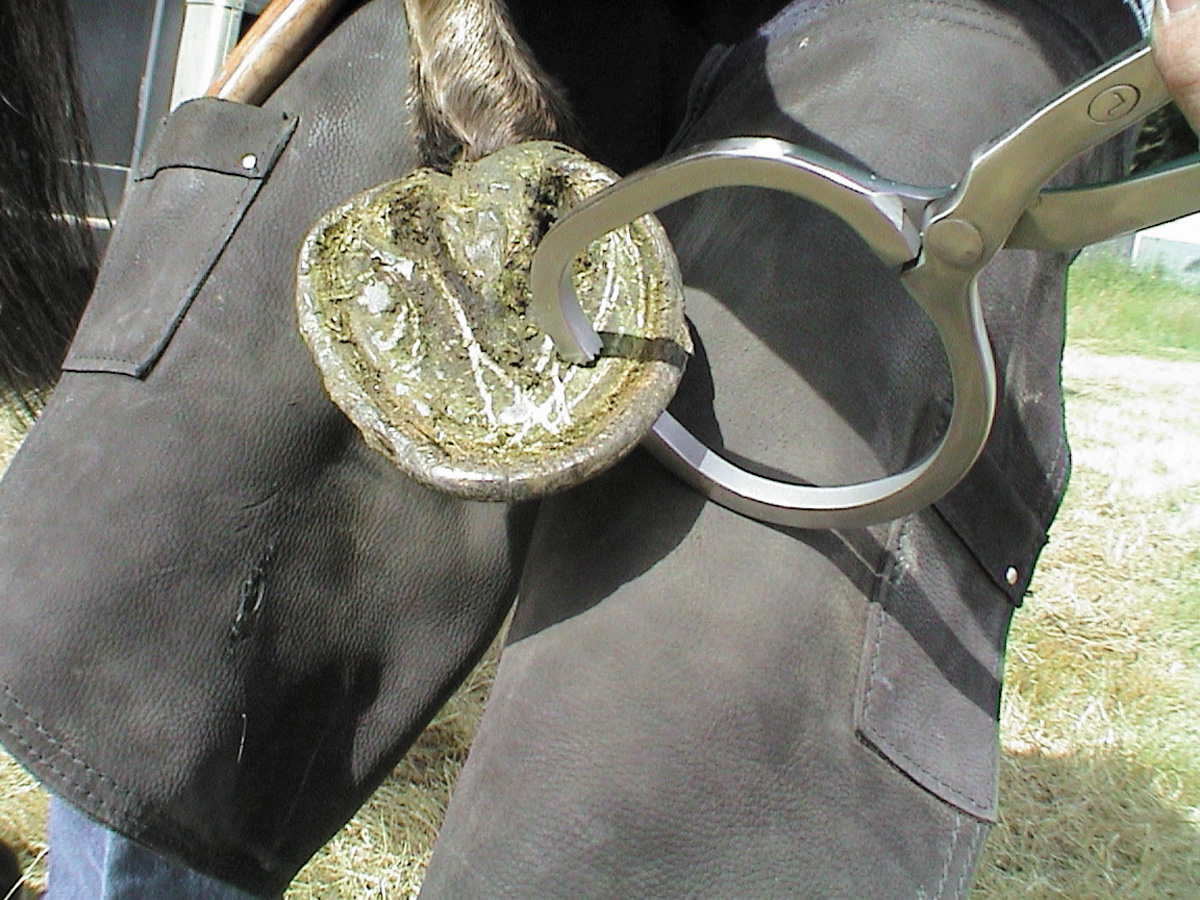 Htest 3 Farrier Products
