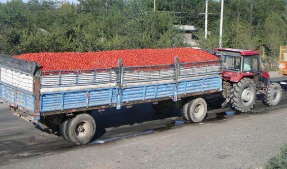 https://i2.wp.com/www.farwestchina.com/wp-content/uploads/2011/08/Tomato-Transportation-583x343.jpg?resize=583%2C343