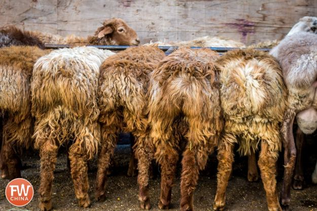 Sheep butts in Urumqi, Xinjiang