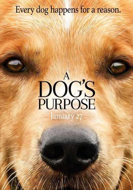 فيلم A Dog's Purpose 2017 مترجم