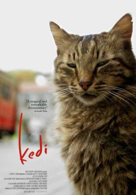 فيلم Kedi 2017 مترجم