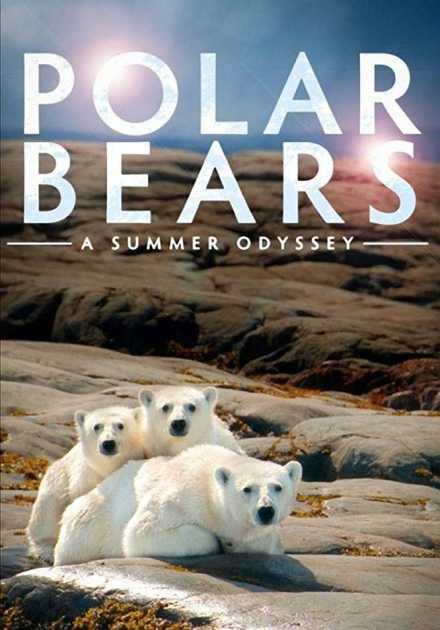 فيلم Polar Bears A Summer Odyssey 2012 مترجم
