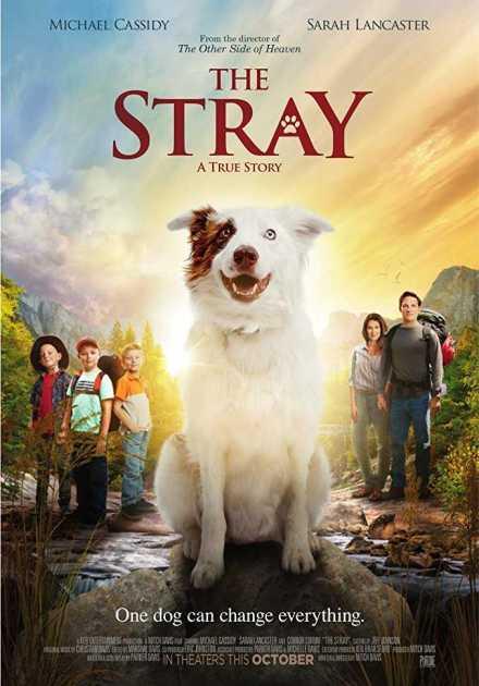 فيلم The Stray 2017 مترجم