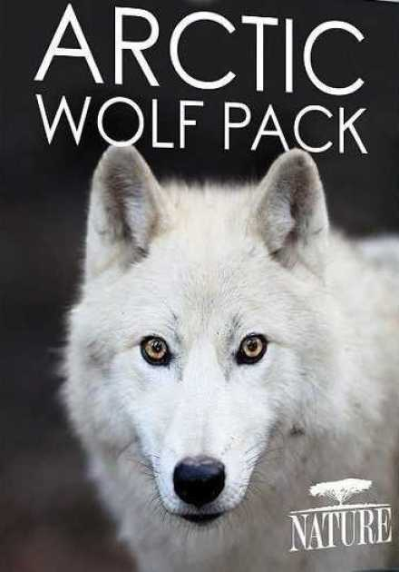 فيلم PBS Nature Arctic Wolf Pack 2018 مترجم