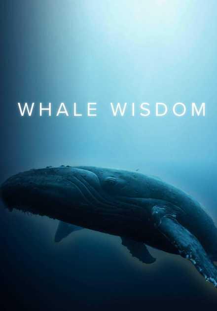 فيلم Whale Wisdom 2019 مترجم