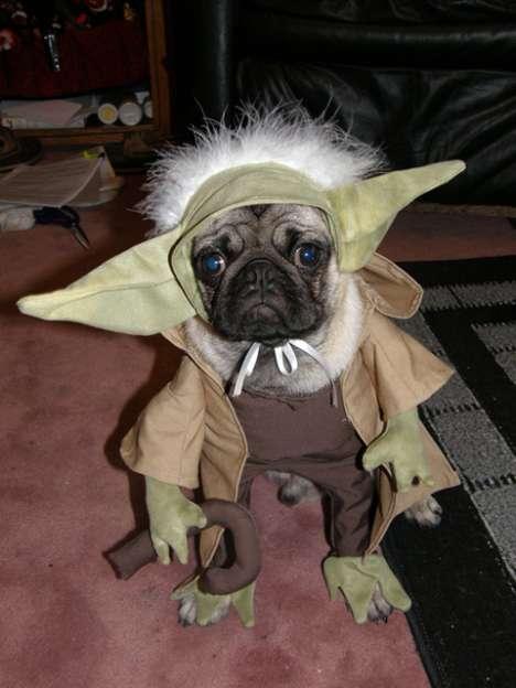 pugs-in-costumes