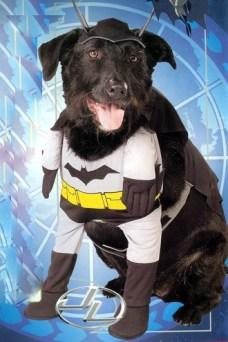 fantasia cachorro batman