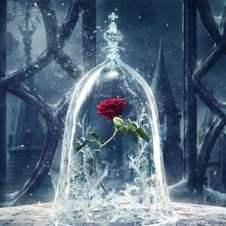 A rosa vermelha do filme a bela e a fera