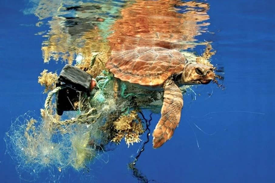 Tartaruga Marinha no mar poluído