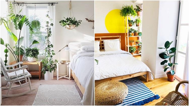 duas fotos com plantas próximas das janelas dos quartos