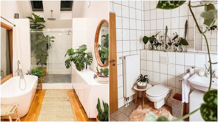selva urbana em dois banheiros