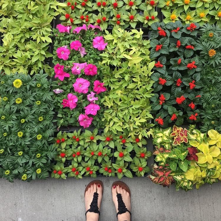 mudas de flores vistas de cima