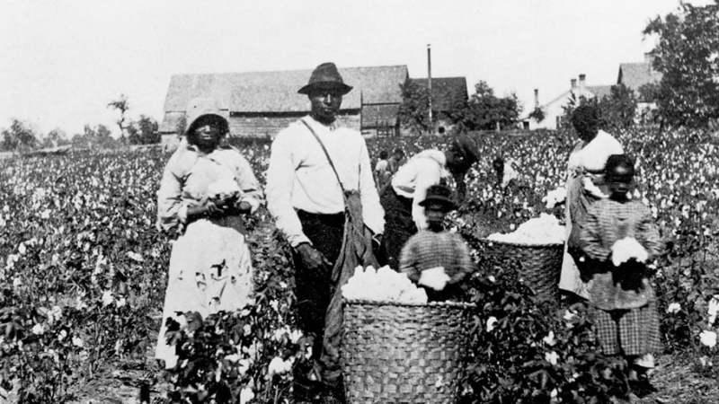 Trabalhadores de uma fazenda de algodão nos EUA.