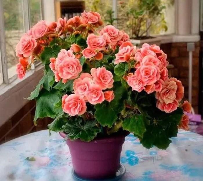 Vaso roxo com flores para dentro de casa.