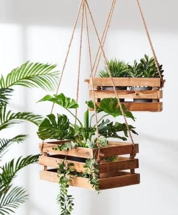 Plantas pendentes no caixote de madeira.