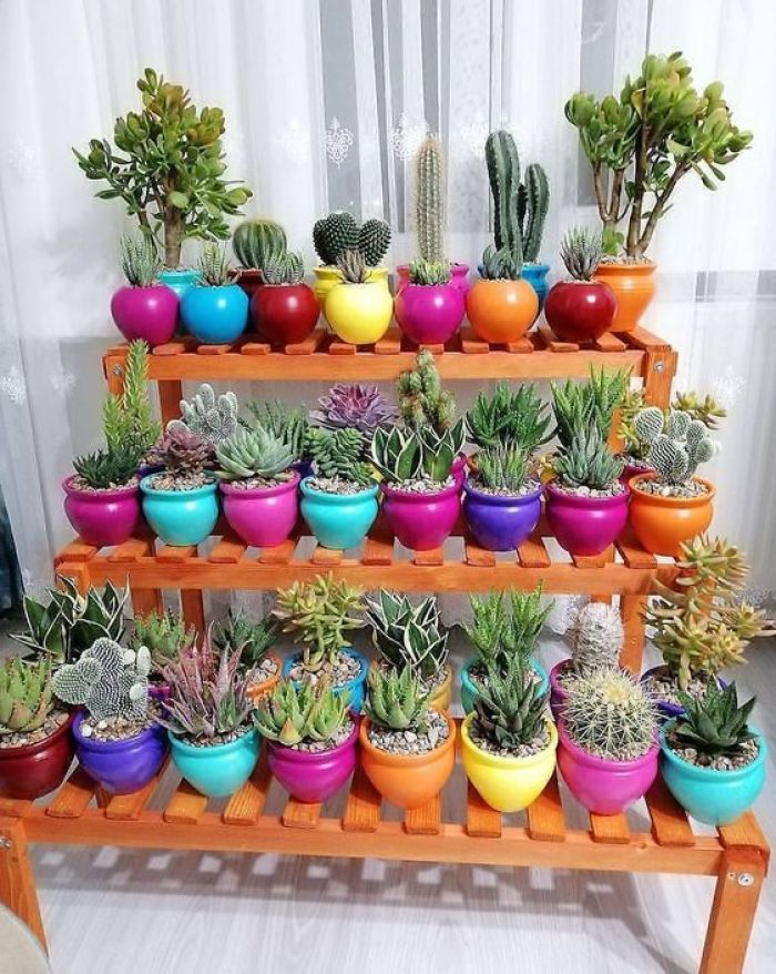 Plantas pra varanda: cacto.