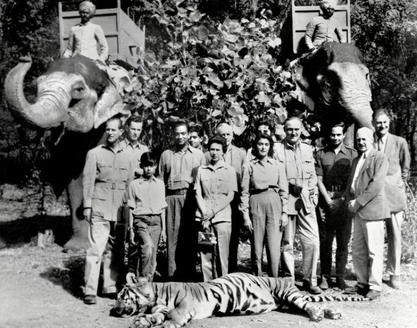 Caça ao tigre.