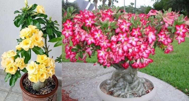 quintal decorado com flores