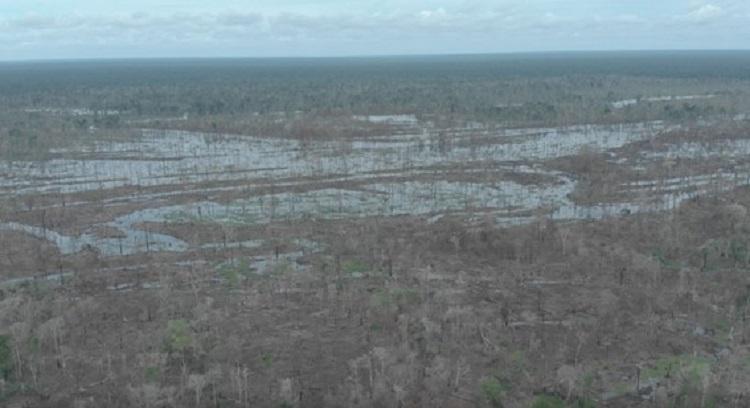 área desmatada floresta amazônica
