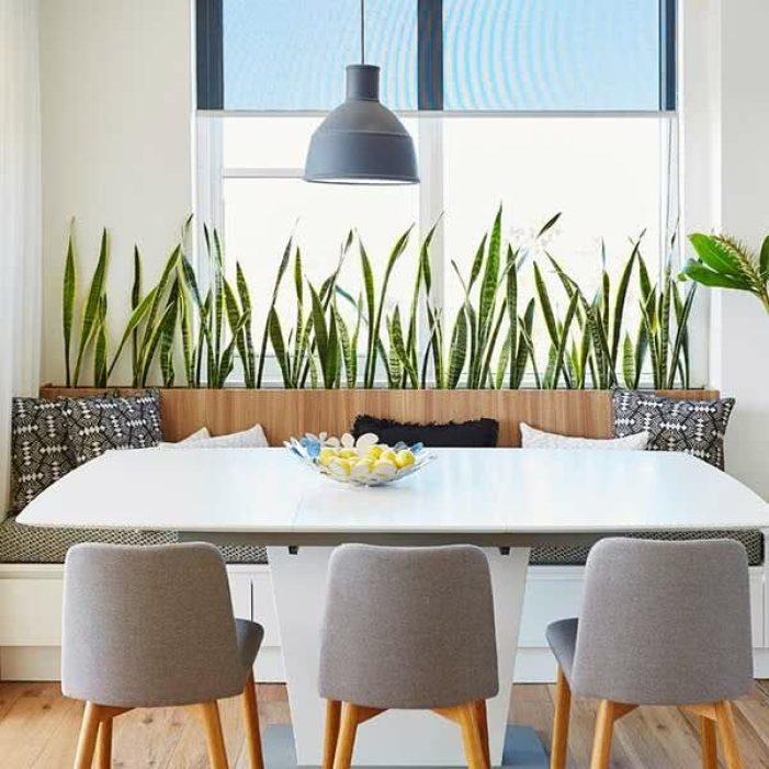 Plantas para apartamento na cozinha.