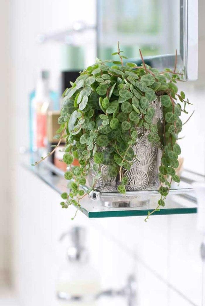 Vaso de planta no banheiro.