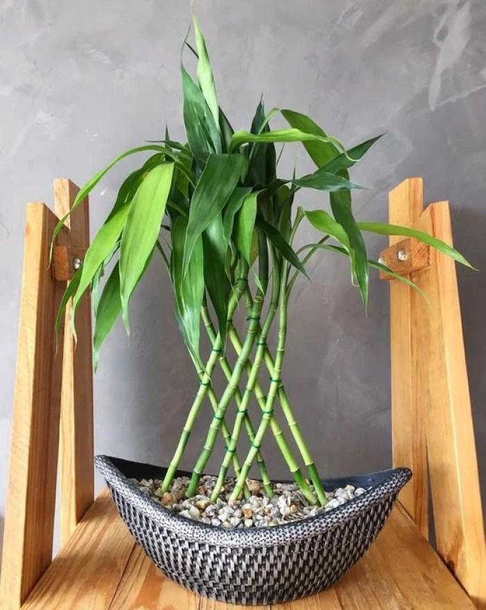 Plantas para banheiro pequenas.