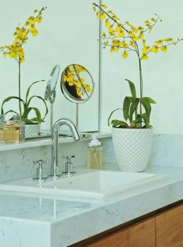 Orquídea amarela.