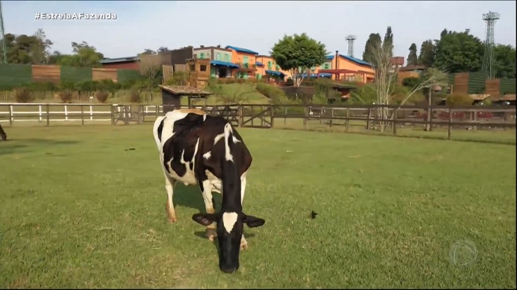 Foto de vaca pastando com sede de A Fazenda 13 vista de longe