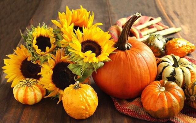Is typisch Halloween eten de 'pompoen' het nieuwe superfood? Alles over het typische Halloween eten: de pompoen. Niet alleen leuk ter decoratie.