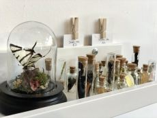 A close up of a shelf in Moth Studios, newcastle featuring a pinned butterfly in a belljar, broken butterfly wings and some small bugs. - Fashion Voyeur Blog
