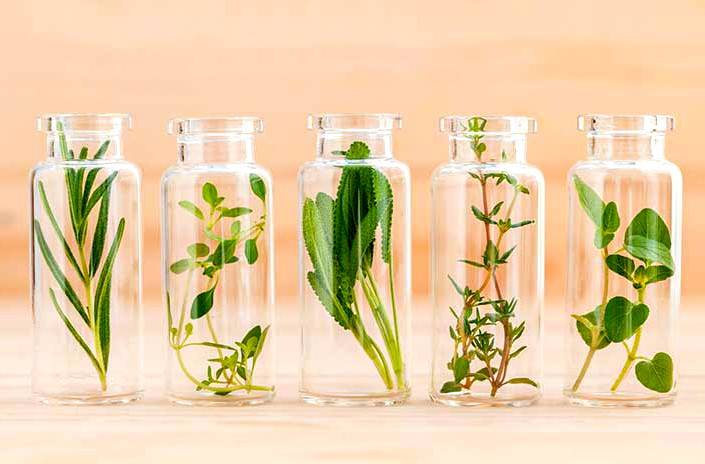 Anti -ageing Essential oils