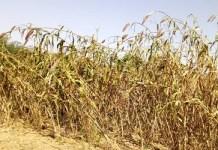 Amélioration- des- rendements- agricoles – le- bocage- l'autre- alternative