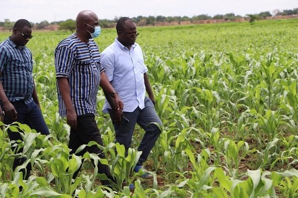 Suivi-de-la-compagne-agricole-2020-dans-la-région-du-nord