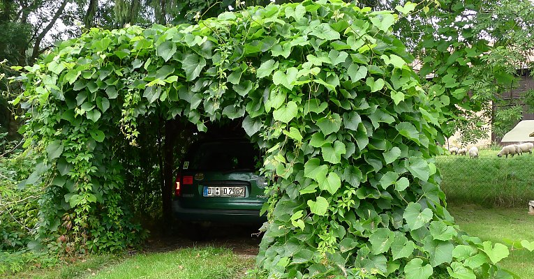 Suitable Climbing Plants Classified By Growth Habit