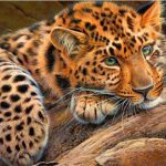 Dyr, kattedyr ,5D Diamond Maleri Kors Ctitch Kit